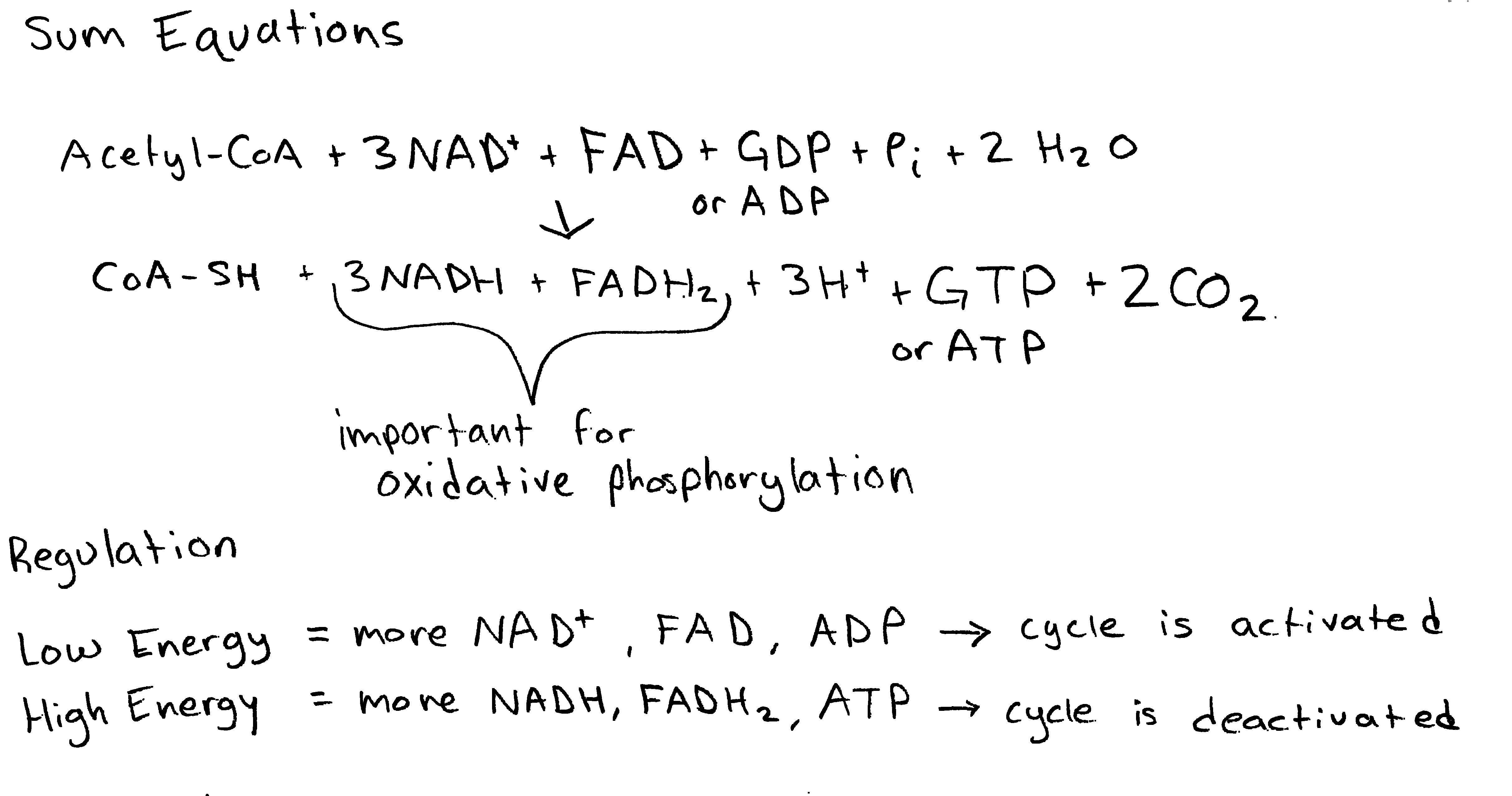 total number of atp produced in krebs cycle