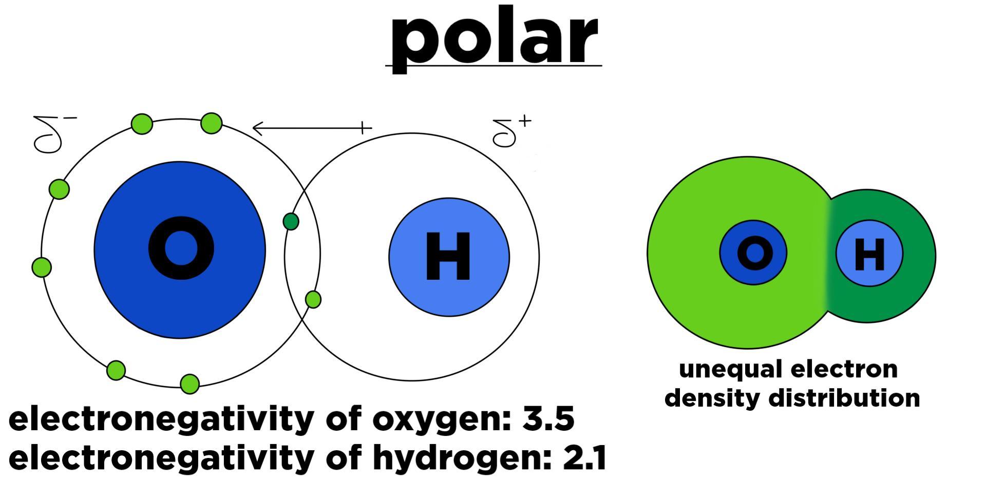 Biology: Polar vs  Nonpolar Bonds - Expii